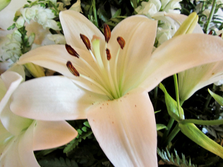 White lily flower. Lilies are very aromatic flowers and it is common to see them in gifts, floral arrangements, and also decorating gardens. In addition, its medicinal properties have long been documented since antiquity, and is present in the emblems of  Reklamní fotografie