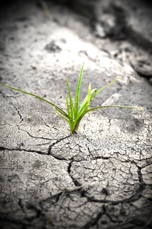 hope: Green plant growing from cracked earth. New life. Stock Photo