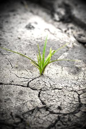 sequias: Planta verde de tierra agrietada. Nueva vida.