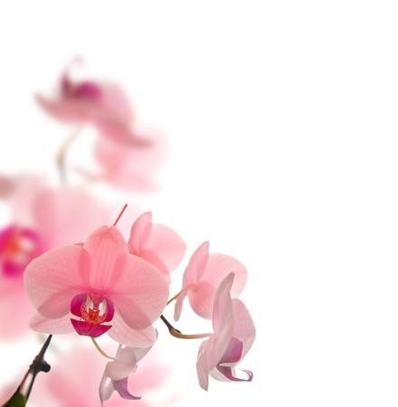 mooie bloemen op witte achtergrond