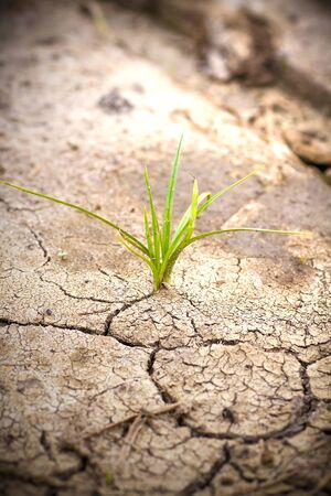 dry land: Green plant growing from cracked earth. New life. Stock Photo