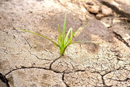 Green plant growing from cracked earth. New life. Stock Photo - 10687254