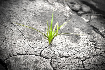 Green plant growing from cracked earth. New life. Stock Photo - 10906045