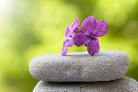 nature photography: Flower balanced on stones, Selective Focus