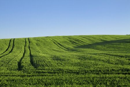 filed: Landscape - green filed, the blue sky Stock Photo