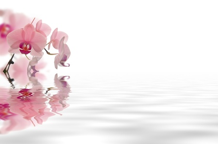 beauty background: beautyfull flowers in white background floating in water