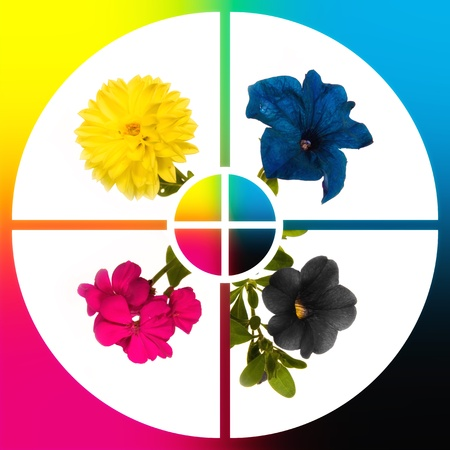 Conceptual image-grid of flowers colour CMYK photo
