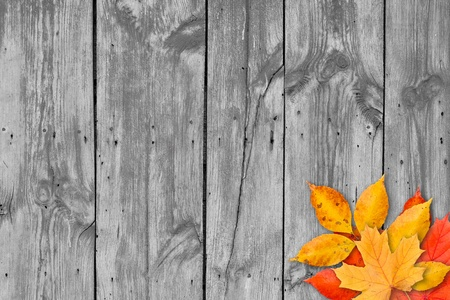 thanksgiving background: Autumn leaves over wooden background with copy space