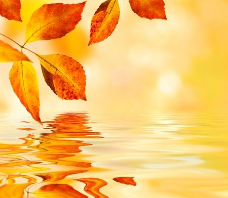 wet leaf: autumn leaves background  selective focus