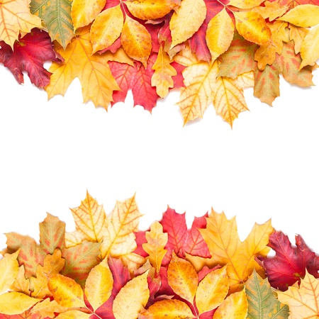 fall of the leafs: autumn leafs on white background