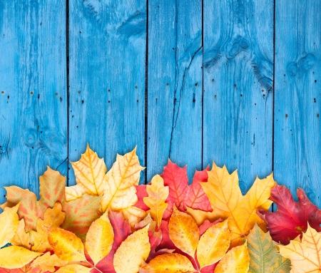 accion de gracias: Hojas de otoño sobre fondo de madera con espacio de copia