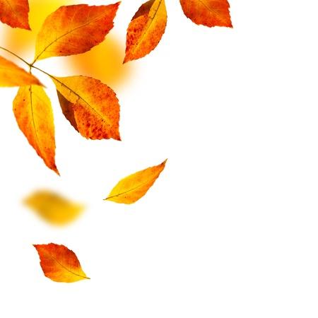 白い背景の上の秋を葉します。