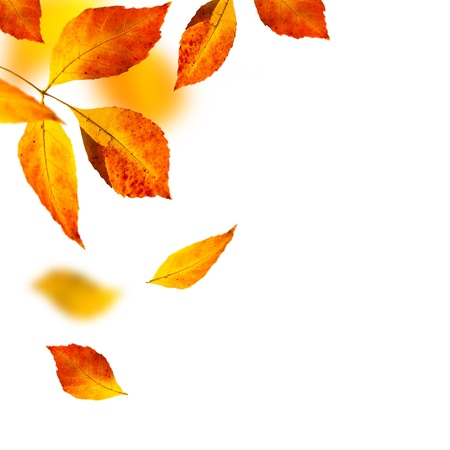 autumn leafs on white background photo