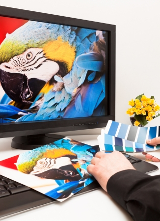 Graphic designer at work  Color samples  Blue parrot macaw bird photo