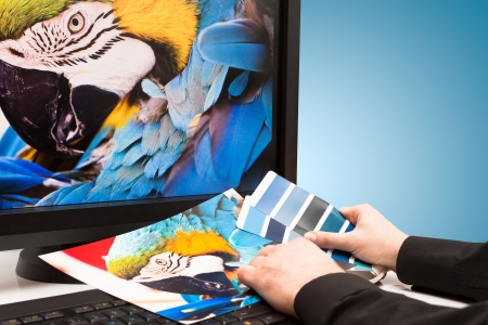 rainbow print: Graphic designer at work  Color samples  Blue parrot macaw bird photo