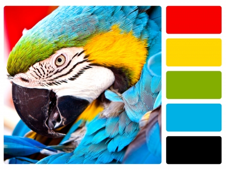multi colors: Parrot bird colour palette with complimentary swatches  Stock Photo