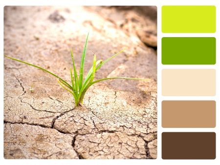 color tone: Green plant, cracked earth colour palette with complimentary swatches  Stock Photo