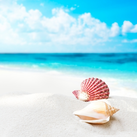 Shell on the beach photo