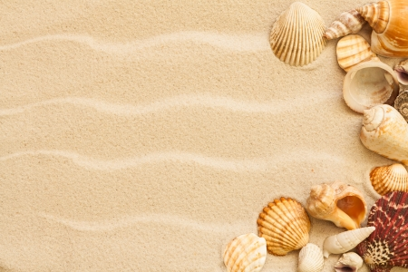 caribbean climate: sea shells with sand as background Stock Photo