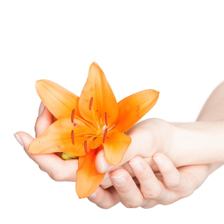 orange lily: Beautiful woman hands and lily flower over white background