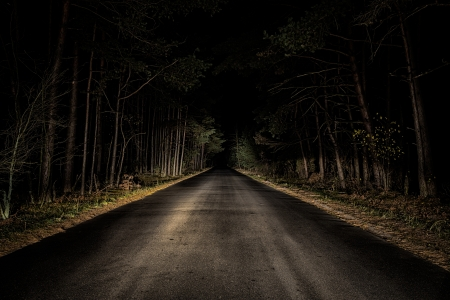 Night Road on dark forest