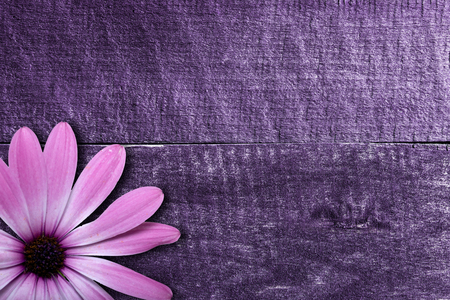 violet flower on vintage wooden background photo