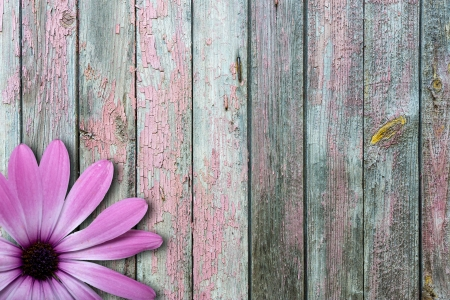 빈티지 나무 배경에 보라색 꽃