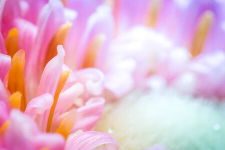 Colorful flower closeup  Selective focus on beautiful background  photo
