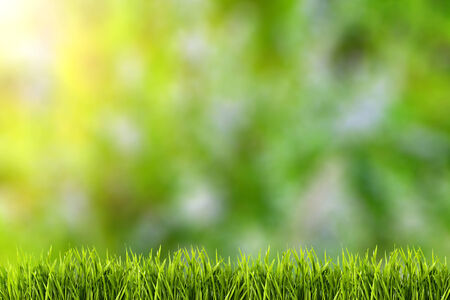 Abstract natural backgrounds with beauty bokeh and green grass  photo