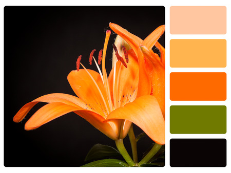 color tone: Colour palette with complimentary swatches