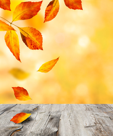 autumn  and old wood background photo