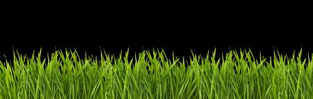 Grass on a black background
