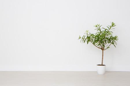 Fleur dans un pot sur un fond blanc. Vide. Banque d'images