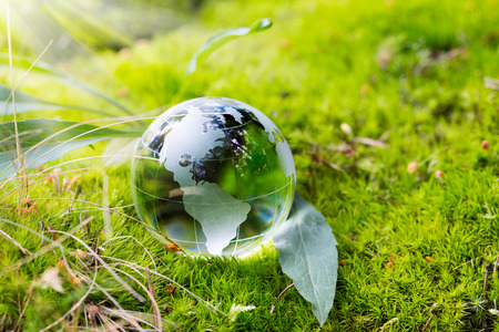 world globe map: Crystal globe resting on moss in a forest.