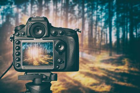 Fotografía fotógrafo lente vista de la cámara de vídeo lente de bosque de árboles de fotos digital de cristal foco borrosa paisaje luz fotográfica concepto de color puesta de sol salida del sol sol - Imagen Foto de archivo - 64976807