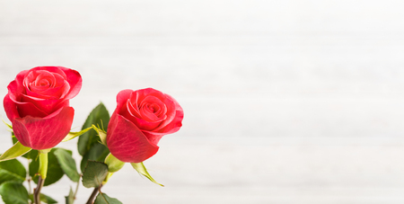 Valentines Day background. Two red roses on the white wooden background.