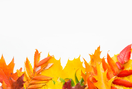 autumn leafs color on islolated white background