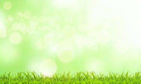 Ostern-Konzept. Grünes Gras und unscharfer grüner Hintergrund an einem sonnigen Tag.