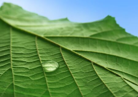 Water droplet on leaf