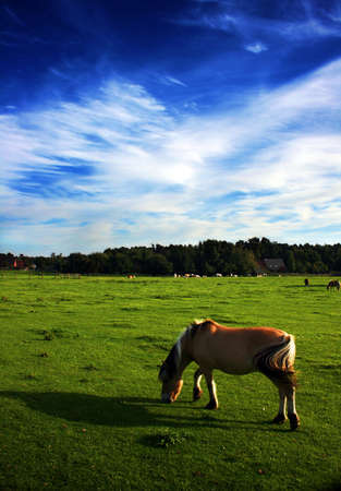 Horses peacefully grazing on a late summer evening