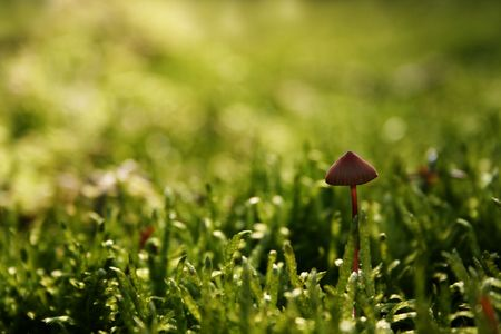 Mushroom growing on the mossy forest floor Stock Photo