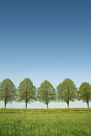 Row of lush green trees on a beautiful spring day
