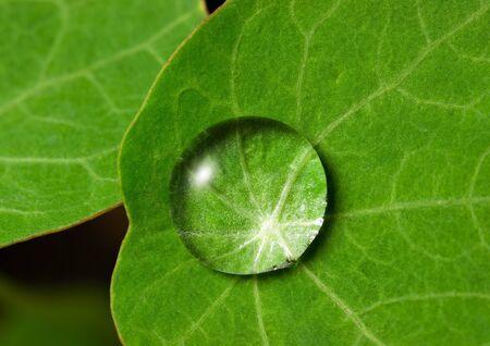 Drop of clean water on a fresh green leaf Stock Photo