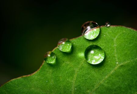 Little droplets of water on the edge of a green leaf