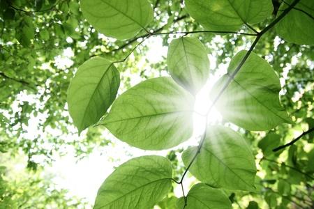 Sunbeams shining through lush green foliage