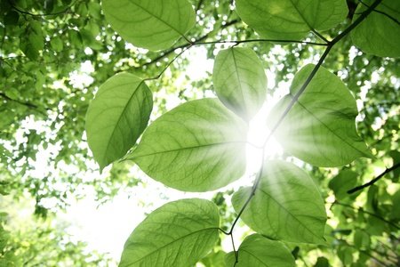 Sunbeams shining through lush green foliage