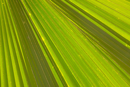 tree of life: Textures and lines of Green Palm leaves
