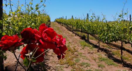 wine testing: Winery, Ramona, California