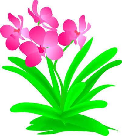 contrast: pink flowers vector contrast Illustration