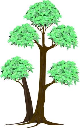 crone: tree bonsai thai style abstract